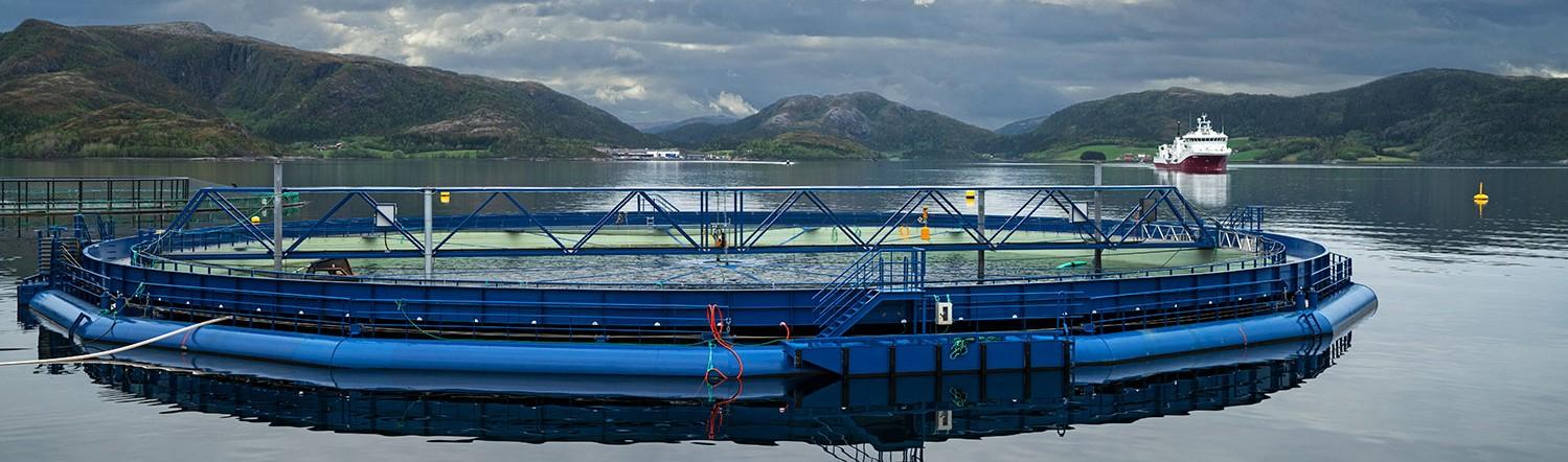 Aquatraz is a semi closed fish cage preventing sea lice, escaped salmon and improving fish welfare